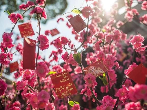 счастливые деньги висящие на цветущем дереве